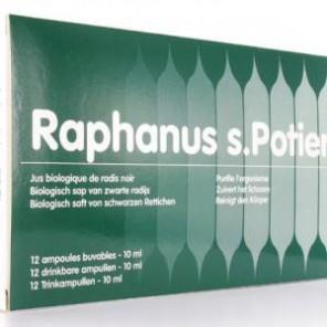 RAPHANUS AMP BUV 10ML 12
