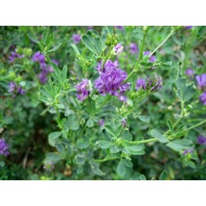 EPS ALFALFA 150 ML